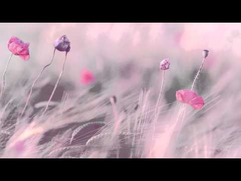 3 HOURS Best Relaxing Music Romantic Piano Background Music for Stress Relief Therapy Love