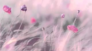 3 HOURS Best Relaxing Music 'Romantic Piano