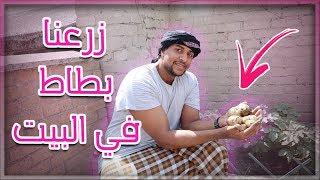 زرعنا بطاطس في البيت | شوفو اصغر بطاطه في العالم !!!