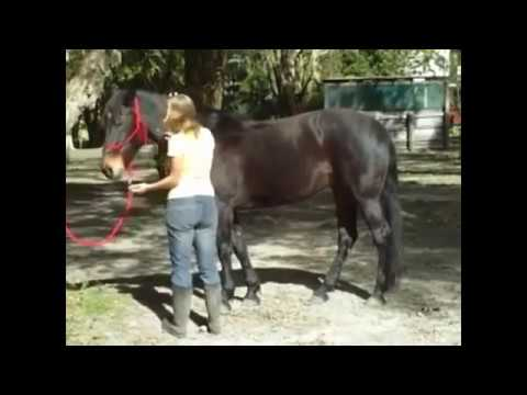 The Fluid Horse   Equine Massage