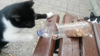 the clever cat is eating with paw than plastic bottle liver