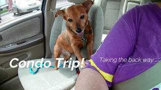 Big Gal Little Dog - Ep. 1 - Condo Trip!