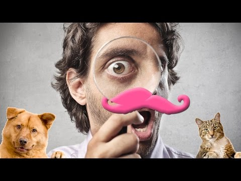 EXTERMINATE ALL ANIMALS Animal Inspector