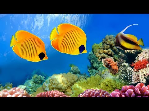 CORAL REEF AQUARIUM COLLECTION 「24 7」 🔴 Relaxing Music for Sleep Study Yoga & Meditation