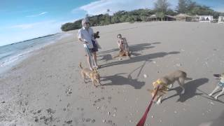 Wolfpack Beach Walk, Koh Lanta - GoPro 1080p