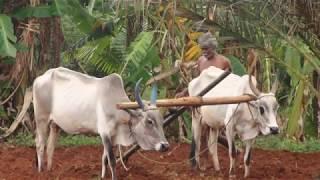 Native Breeds of Tamilnadu