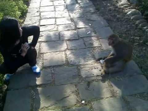 Xxx Mp4 Monkey Enjoy S Eating 3gp Sex