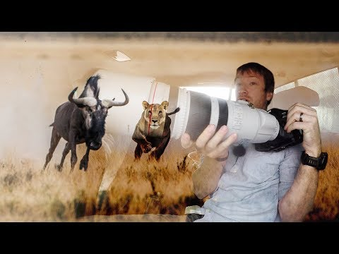Xxx Mp4 Photographing A Lion Hunting In Namibia 3gp Sex