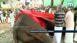 Tusker Thiruvambady Sivasundar, A Favourite Of Pooram Enthusiasts, Dies| Mathrubhumi News