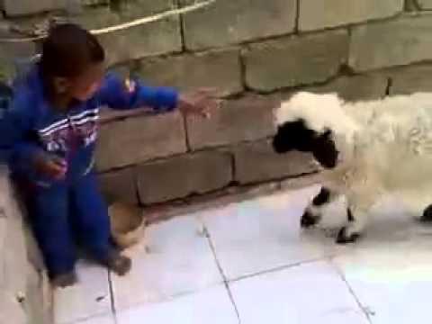 Xxx Mp4 Küçük çocuk Koyun Amatör Komik Videolar Amateur Funny Videos 3gp Sex