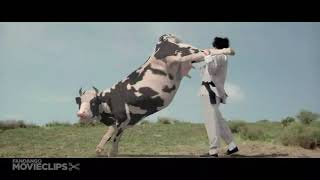 crazy cow fight / funny video /movie clip/ by nawab zada