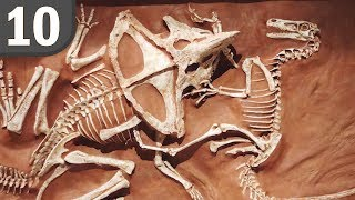 Top 10 Animal Fossils Frozen in Time