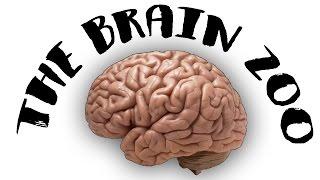 The Brain Zoo - Basics of Meditation