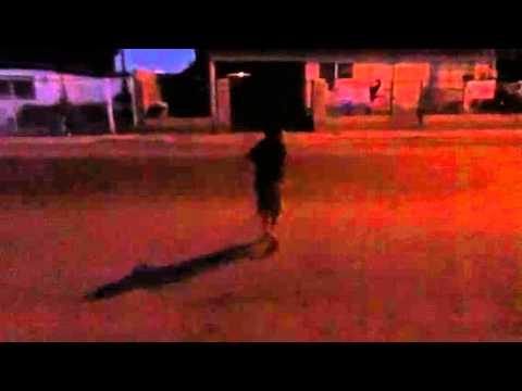 Gatito shuffle