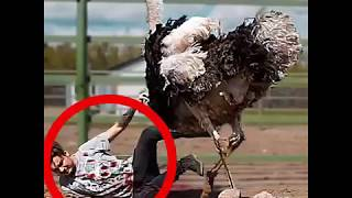 Animal  Fight With Human Man And Funny Video Mp4