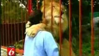 Amazing Lion Hug
