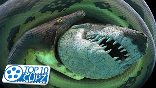Top 10 Largest Snakes in the World - TOP 10 CLIPZ