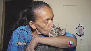 Mujer que cuida a más de 100 gatos busca desesperada un nuevo hogar para sus consentidos