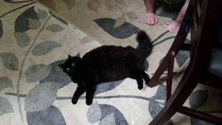 Kitty Compilation 4