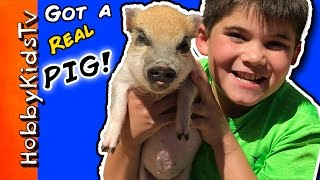 🐷HobbyPig Gets a PIG! Mini Pig Pen Tour with HobbyPig, What