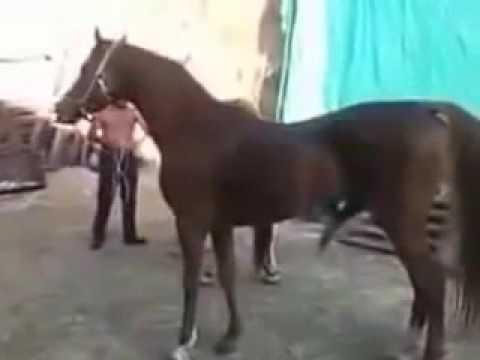 Xxx Mp4 Kelucuan Kuda Saat Melihat Cewek Sexy 3gp Sex