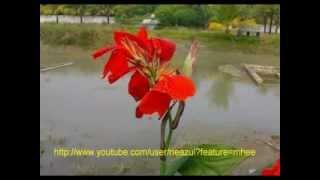 Chacha cha chai ( Comedy Song)- Nokul Kumar Biswas