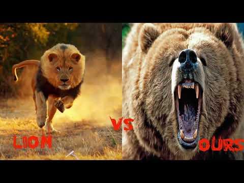 10 Combats d'Animaux sauvages les Plus Impressionnants en Vidéo! Les Combats à Mort entre Animaux