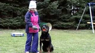 Six year old girl trains a Rottweiler