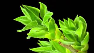 growth of plants in slow motion