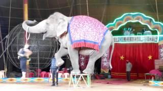 Apollo Circus Elephant with Girl Romance Dance of India