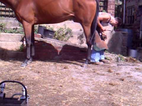 Xxx Mp4 Shoeing A Horse In Leeds 3gp 3gp Sex
