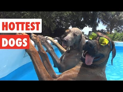 Xxx Mp4 Hottest Dogs Funny Dog Video Compilation 2017 3gp Sex