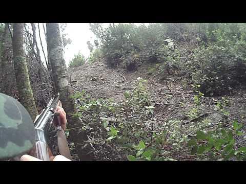 caccia al cinghiale lupo 2