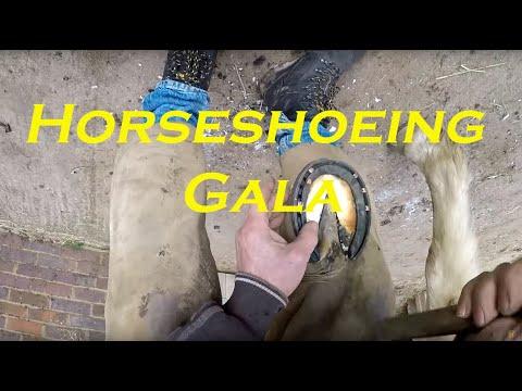 Xxx Mp4 Horse Shoeing Gala 3gp Sex