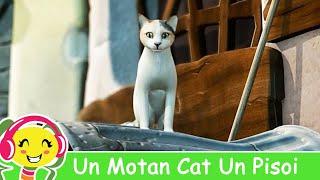 Un Motan Cat Un Pisoi - Cantece Gradinita .ro