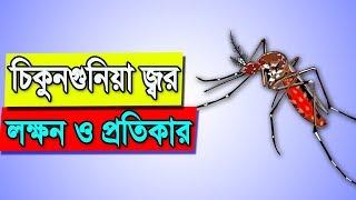 How To Recover Chikungunya Virus | Chikungunya Symptoms And Remedies | Bangla Health Tips