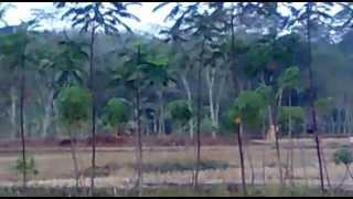 Anak sekolah ngentot di pinggir sawah
