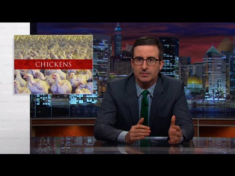 Xxx Mp4 Chickens Last Week Tonight With John Oliver HBO 3gp Sex