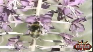 برنامج أسماء الله الحسنى - تلفزيون الكويت سنة 1989