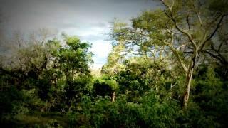 A walk in the Sky