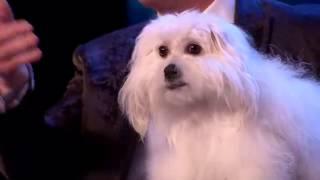 كلب يتكلم في برنامج المواهب !!!!!