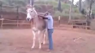 WhatsApp Video Curto Engraçado