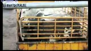 Documentário sobre Transporte de Animais p/ Países Árabes