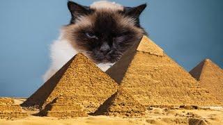 প্রাচীন মিশরের বিড়াল রহস্য!! Egypt Mysterious Cat