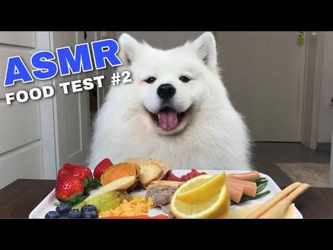 Xxx Mp4 ASMR Dog Reviewing Different Types Of Food 2 I MAYASMR 3gp Sex