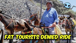 Greece bans fat tourists from riding Donkeys