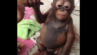 Sad Story Of A BABY ORANGUTAN Who Couldnt Grow Up, Caged In A Chicken Coop And Fed Only Milk