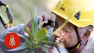 Taking on Hawaii's Plant Extinction Crisis
