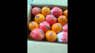 برتقال فالنسيا تصدير,برتقال صيفي تصدير,مصدرين البرتقال الصيفي,محطات برتقال صيفي مصري