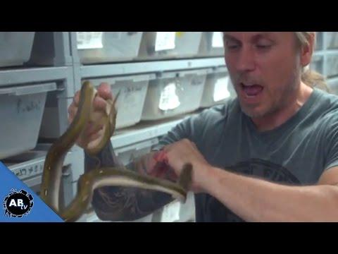 Man Lets Snakes Bite Just For Fun SnakeBytesTV